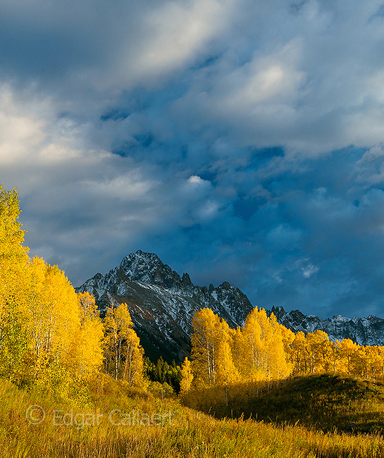 Aspen, Mount Sneffels, Dallas Divide, Uncompahgre National Forest, Colorado