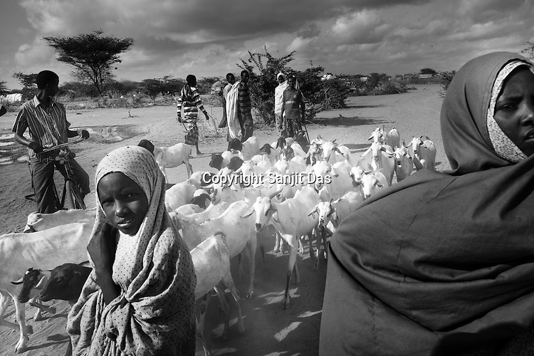 Somali refugees walk their goats in IFO camp in Dadaab, world's largest refugee camp in Eastern Kenya. Photo: Sanjit Das/Panos
