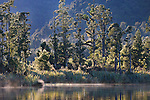 Native forest at Lake Mapourika. Westland National Park. New Zealand.