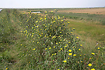 Low lying reclaimed land, Boyton marshes, Butley River Creek, Suffolk, England