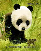 GIORDANO, REALISTIC ANIMALS, REALISTISCHE TIERE, ANIMALES REALISTICOS, paintings+++++,USGI499,#A#,panda