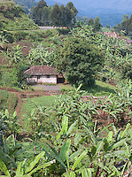 Small village in the hillside in Nyungwe National Park, Rwanda