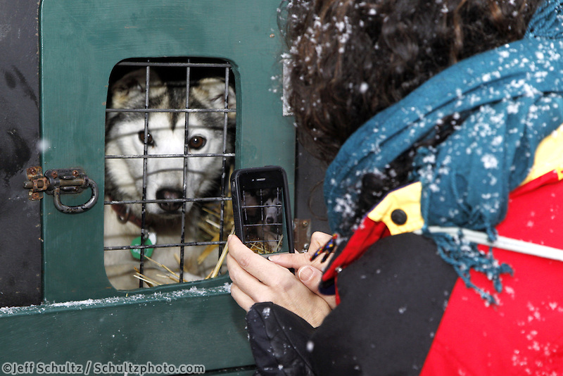 Saturday, March 3, 2012  Maria Balsamo of Seattle, WA, took pictures of Anjanette Steer's dogs at the Ceremonial Start of Iditarod 2012 in downtown Anchorage, Alaska.