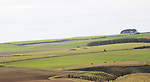 Chalk landscape distant view of prehistoric burial mounds near Baltic farm,  North Wessex Downs, Wiltshire, England, UK