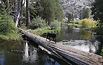 Views of the Lake Margaret Trailhead near Kirkwood, Ca. on Sept. 9, 2010..Photo by Cathleen Allison