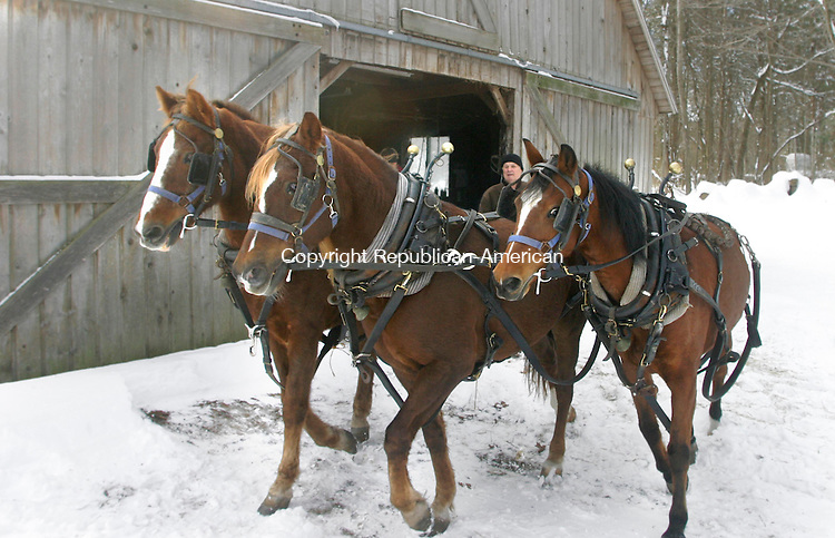 SOUTHBURY, CT- 10 DECEMBER 2005-121005JW06.jpg -- Glen Morris of Southbury moves his sleigh pulling team of Morgan horses, readying them for a sleigh ride Saturday afternoon. Jonathan Wilcox Republican-American