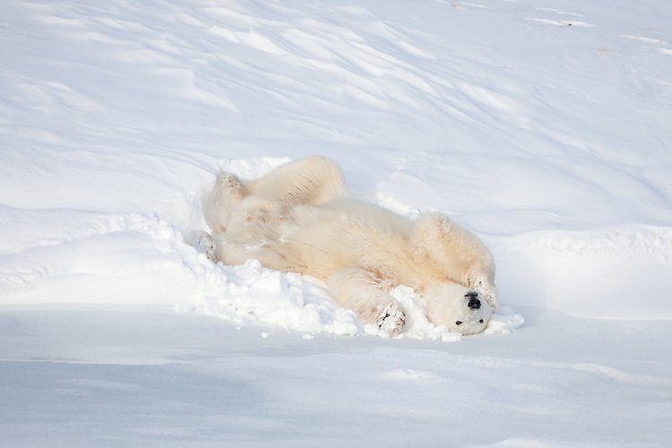 Image result for lying in a snowbank