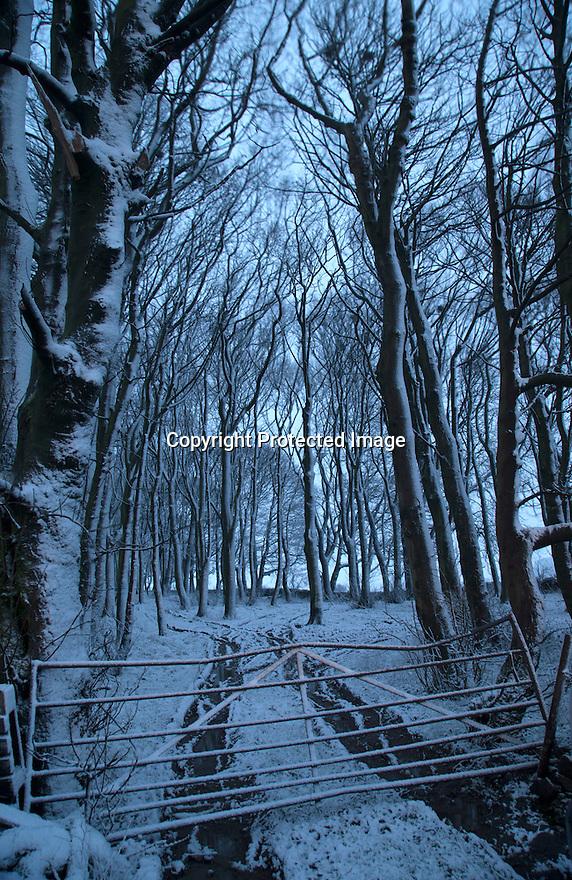 14/01/16<br /> <br /> Snowfall clings to woodland before dawn near Biggin in the Derbyshire Peak District.<br /> <br /> All Rights Reserved: F Stop Press Ltd. +44(0)1335 418365   +44 (0)7765 242650 www.fstoppress.com