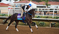 DEL MAR, CA - OCTOBER 02: Tap Daddy, owned by Winchell Thoroughbreds LLC and trained by Steven M. Asmussen, exercises in preparation for Breeders' Cup Juvenile Turf at Del Mar Thoroughbred Club on November 2, 2017 in Del Mar, California. (Photo by Anna Purdy/Eclipse Sportswire/Breeders Cup)