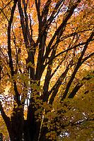 Fall Foliage in Grand Isle, VT in the Lake Champlain Islands