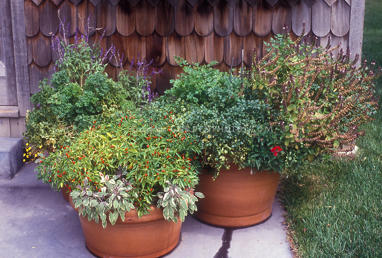 Herbs and vegetables and flowers in terracotta planters container garden