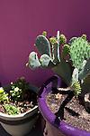 Cactus in Alpine, Texas