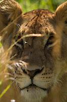 Mara Lions 16/02/16
