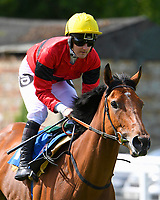 Shiela's Rock ridden by Tom Queally goes down to the start  of The Smith & Williamson Fillies' Novice Stakes (Class 5 during Afternoon Racing at Salisbury Racecourse on 17th May 2018