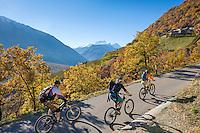 Italy, Alto Adige - Trentino (South Tyrol), valley Val Venosta, Castelbello-Ciardes: mountain bikers climbing at Monte Sole above Castelbello-Ciardes | Italien, Suedtirol, (Alto Adige - Trentino) der  Vinschgau, Kastelbell-Tschars: Mountainbiker auf dem Sonnenberg oberhalb von Kastelbell-Tschars