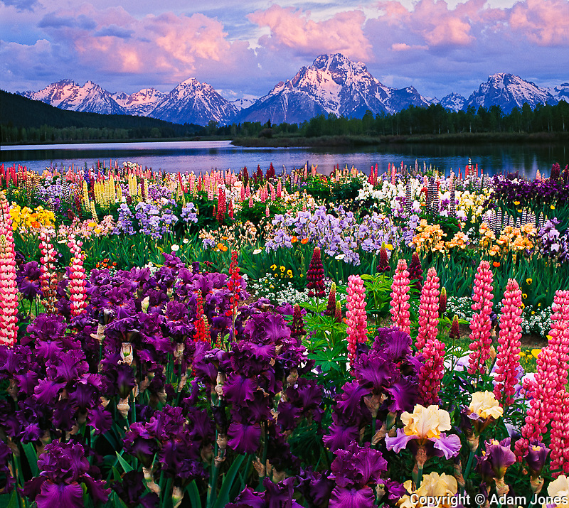 Digital composite of iris garden and Teton Range.