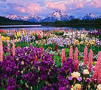 Digital composite of iris garden and Teton Range.