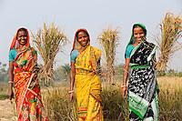 INDIA West Bengal, Dalit woman harvest rice for community rice bank in village Kustora / INDIEN Westbengalen , Dorf Kustora , Reisernte , Dalit Frauen betreiben gemeinsam eine Reisbank zur Ueberbrueckung von Ernteausfaellen und bei Nahrungsverknappung , gefoerdert durch LWS Indien - NUR FÜR REDAKTIONELLE NUTZUNG, Kein PR !