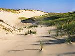 Dunes at Ludington State Park