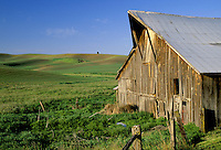 Barn and rolling wheat fields below blue sky, Palouse area, Washington.