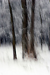 A fine art image of trees in winter blurred vertically