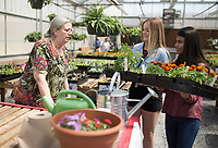 NWA Democrat-Gazette/CHARLIE KAIJO Crystal Cendejas, 18, (from right) and Whitney Storey, 18, carry plants for former Rogers High School teacher Ellen Stubbs of Fayetteville, Thursday, April 12, 2018 at the Rogers High School greenhouse in Rogers.<br />