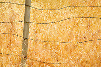 Barbed wire fence and grasses. Oregon.  Hells Canyon National Recreation Area, Oregon