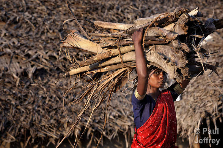 A woman carries firewood in the rural village of Irula in southern India's state of Tamil Nadu.