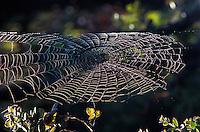 Dew illuminates a large spider web at Hawaii Volcanoes National Park on the Big Island of Hawaii.