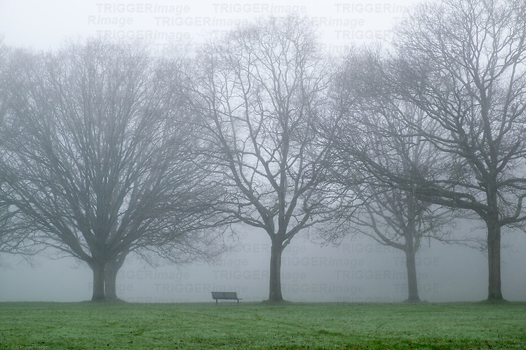 Trees in a misty park with a bench seat