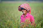 A woman in the Cambodian village of Somrith walks through a rice field.