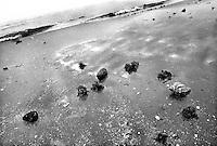 - Delta del Danubio, Mar Nero, Isola del mare di Sacalin. Il Mar Nero, nuovo confine d'Europada gennaio 2007..- Danube Delta Area, Sacalinu Mare Island. The Black Sea, new european border from genuary 2007, from Sacalinu Mare Island.