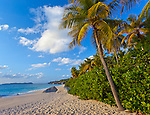 Virgin Gorda, British Virgin Islands, Caribbean<br /> Palm tree leaning out over the beach of Valley Trunk Bay