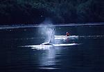orca and kayak