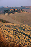 Italien, Toskana, Felder bei Pienza