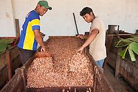 Produção, colheita e estocagem de cacau organico nordeste do estado<br /> Tomé Açú Pará, Brasil.<br /> Foto Lucivaldo Sena<br /> 2016