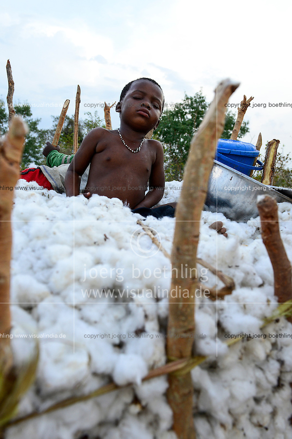 BURKINA FASO, village Soumousso, cotton harvest, transport of harvested cotton with donkey cart from field to village, exhausted child sleep in cotton fibre / Baumwolle Ernte, Transport von Baumwolle mit Eselkarren vom Feld zum Dorf, erschoepftes Kind schlaeft in der Baumwolle