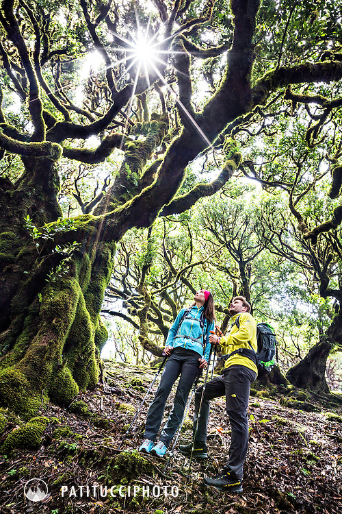 Hikers stand in awe in the foggy forest of Fanal on the island of Madeira