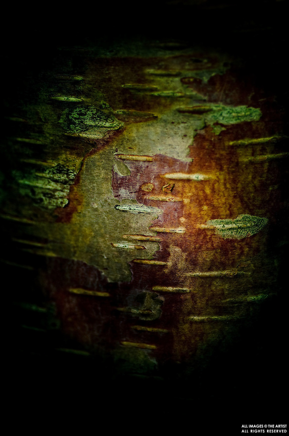 Tree bark reminiscent of planet Earth