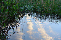 Late afternoon photograph revealing a stream of clouds reflected in water. Photographed at Wakodahatchee Wetlands, Delray Beach, Florida.