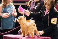 At the 129th annual Westminster Kennel Club Dog Show, held at Madison Square Garden in New York City on February 14, 2005.  <br /> <br /> The Westminster Kennel Club Dog Show is considered to be the most prestigious dog show in the world, a two day event comprising competitions in all 179 breeds of dog recognized by the American Kennel Club.  It is also the second oldest continuously run sporting event in the United States (after the Kentucky Derby), having taken place annually since 1875.  <br /> <br /> The competition is a conformation dog show, meaning that the dogs are judged by how close they match the published ideal standards for their particular breed.  More uncommonly the competition is &quot;benched&quot;, meaning that the dogs are required to be in assigned areas (or benches) while not being judged, allowing them to interact with fans and other breeders.  Dogs are therefore under constant scrutiny throughout the whole process, as are the other species in the competition, namely the owners, handlers, and breeders of these animals.