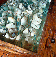 Detail of the coffee table which contains a collection of nautilus shells