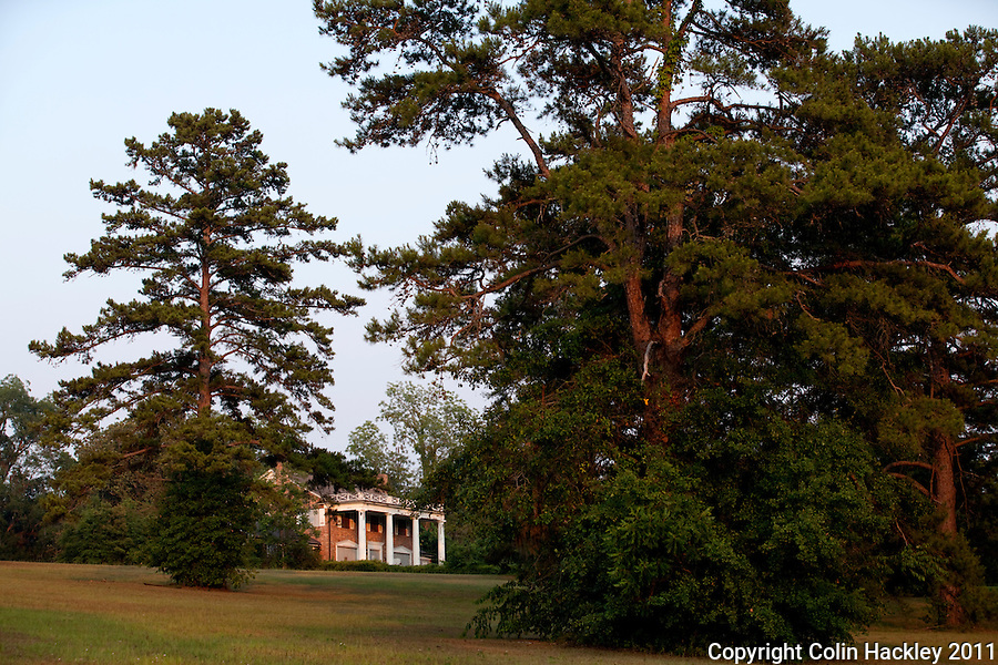GOVERNOR'S PARK: Mature pines frame the home on the crest of the hill..COLIN HACKLEY PHOTO