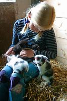 Mädchen spielt im Stall mit jungen Kätzchen, Hauskatze, Katze, Bauernhof
