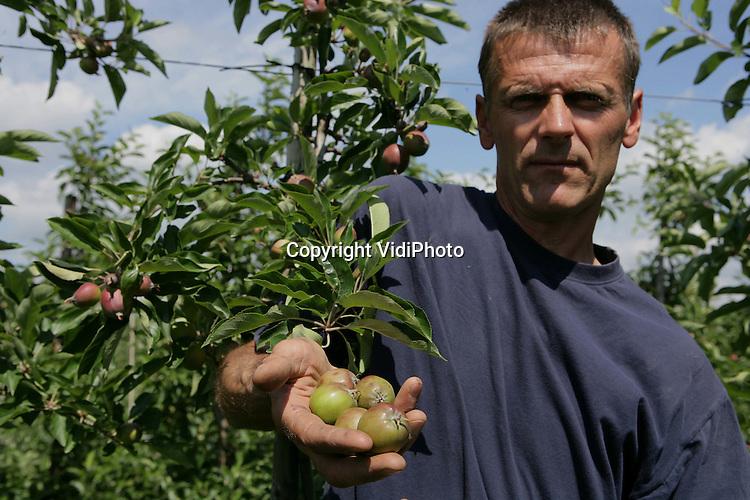Foto: VidiPhoto..WIJK BIJ DUURSTEDE - Fruitteler Nico van Bemmel uit Wijk bj Duurstede toont de hagelschade aan zijn appels.