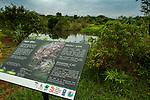 Fishing Cat (Prionailurus viverrinus) educational sign in urban wetland, Urban Fishing Cat Project, Diyasaru Park, Colombo, Sri Lanka
