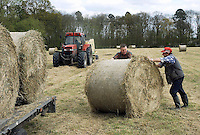 Baling and loading hay,  Holmes Chapel, Cheshire.