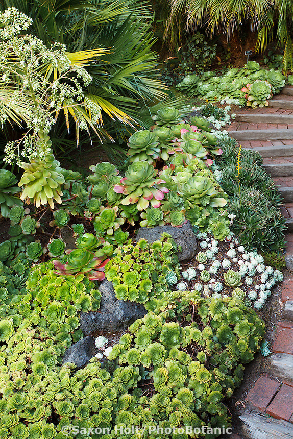 Tapestry of groundcover succulents by path in Worth garden, California