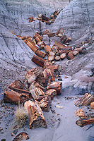 Petrified logs on Blue Mesa<br />