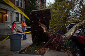 New York, New York<br /> September 16, 2010<br /> <br /> Park Slope after a severe storm and possible tornado. Downed trees on 8th Avenue at 4th Street.
